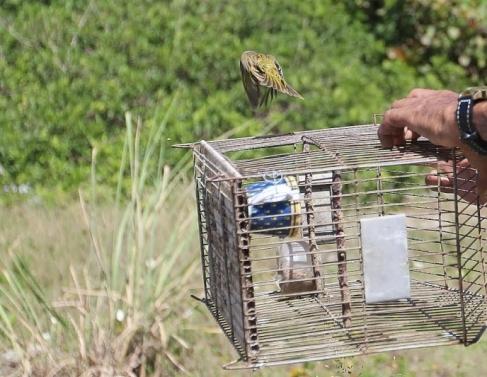 Animais foram soltos em Macaé