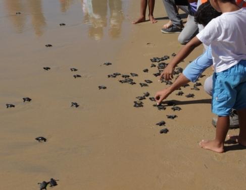 Soltura de tartarugas