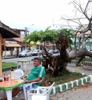 Queda de árvore