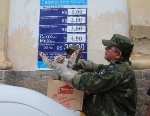 Coruja foi resgatada pela Guarda Ambiental
