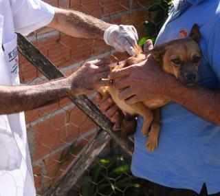 Vacinação contra a raiva animal