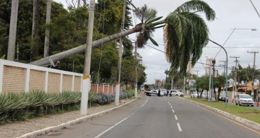 Palmeira tomou na Nilo Peçanha