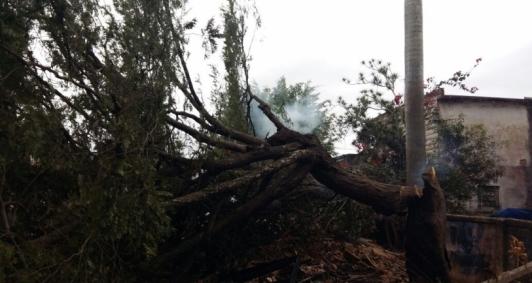 Árvore incendiada no Jardim Carioca