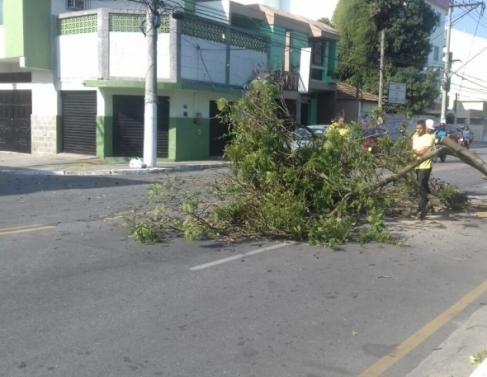 Ventos derrubam árvore na avenida Francisco Lamego