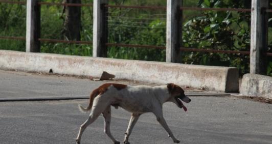 No Brasil, são mais de 30 milhões de animais abandonados