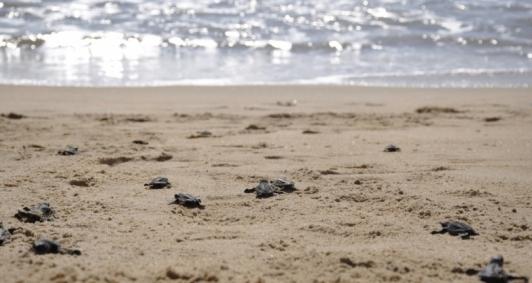 Soltura de tartarugas atraiu veranistas em Atafona