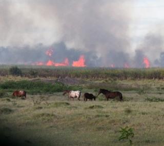 Fogo em plantação de cana-de-açúcar