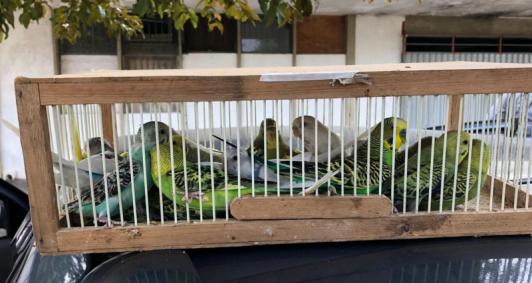 Aves apreendidas na BR 101