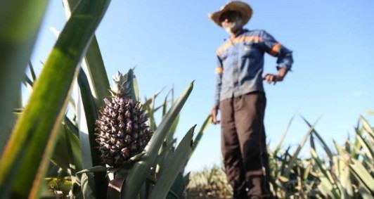 Francisco se dedica à lavoura (Foto: Rodrigo Silveira)