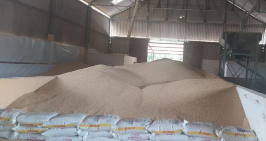 Plantio de grãos no NF
