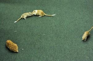 Animais soltos no local - Luis Macedo / Câmara dos Deputados