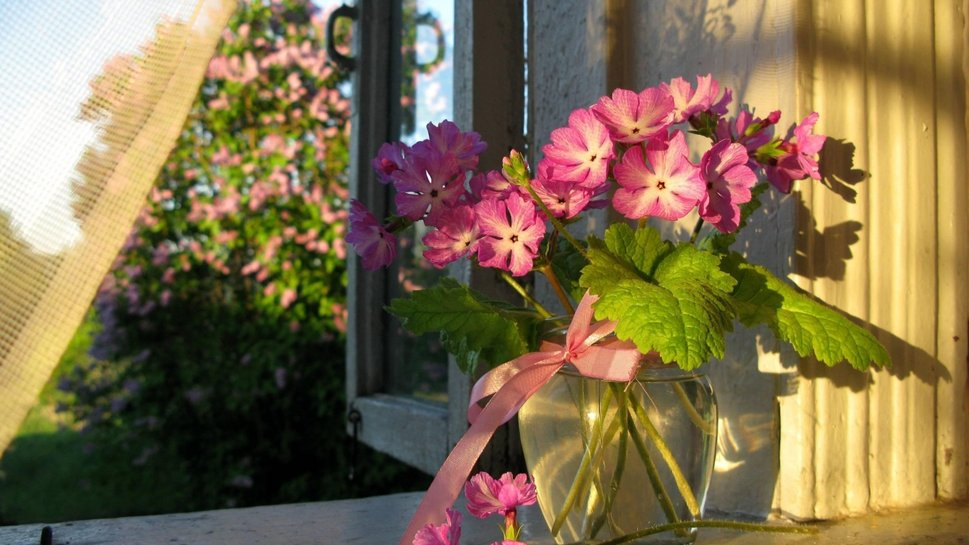 blossoms-in-window_p (1)
