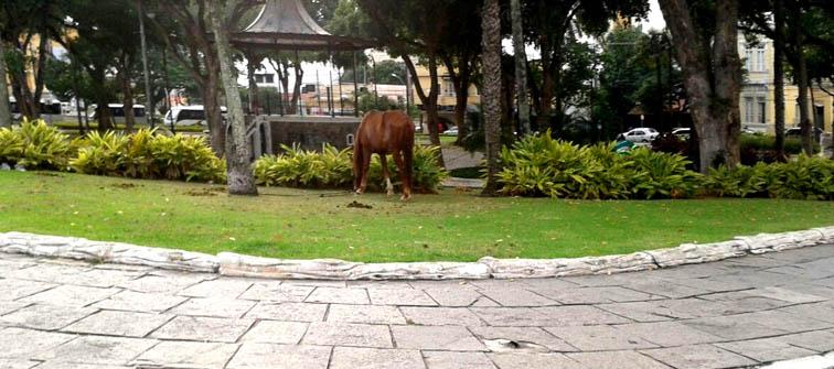 cavalo-3