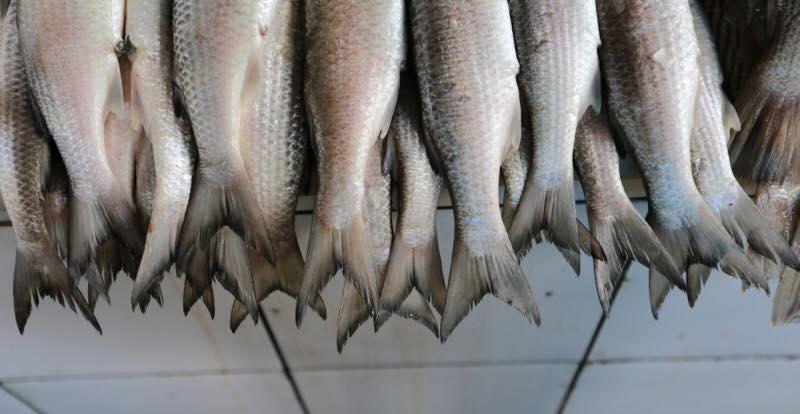 peixes mercado