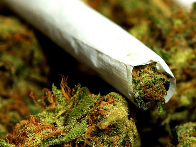 marijuana7 - Cópia