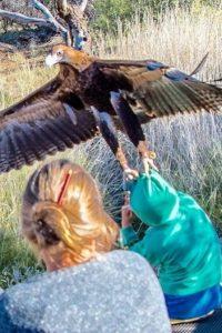 aguia-menino