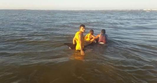 Animal foi devolvido ao mar